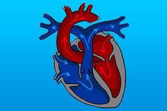Клапаны сердца человека анатомия