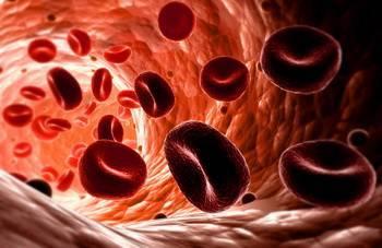 Красные кровяные тельца