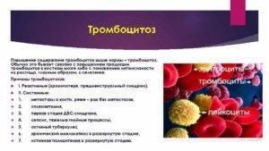 Почему коэффициент больших тромбоцитов повышен и какие последствия?