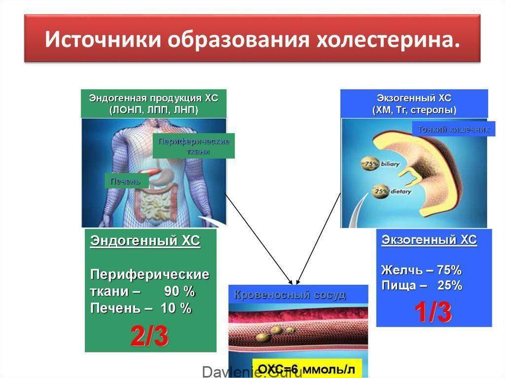 Эндогенный и экзогенный холестерин