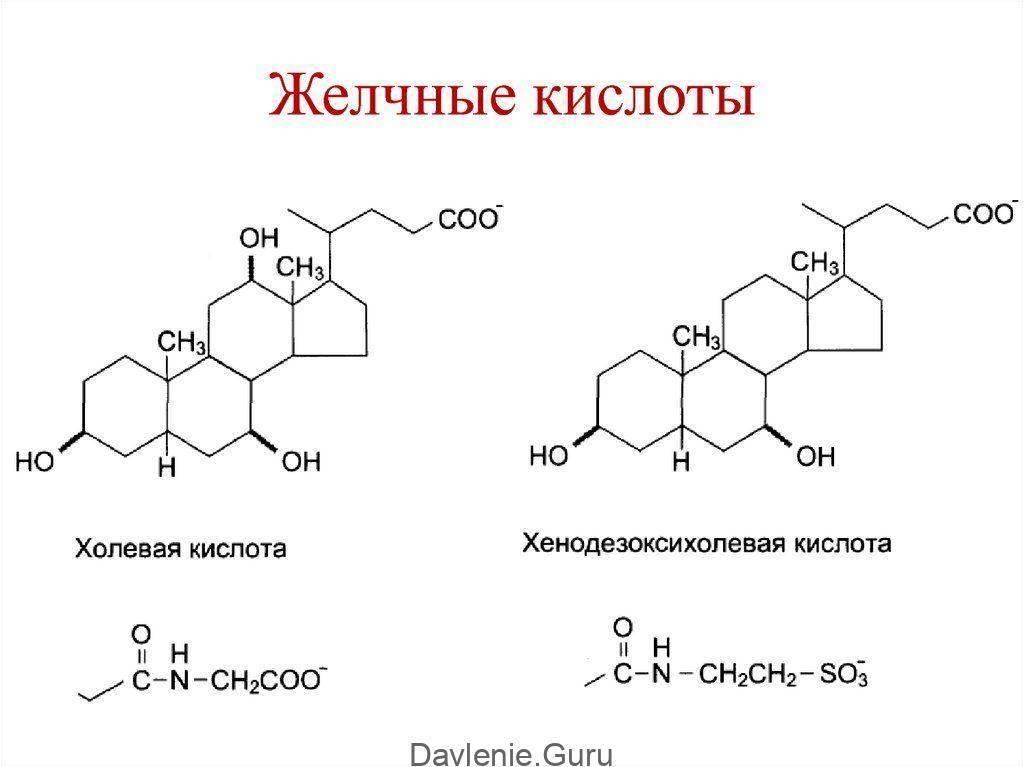 Желчные кислоты