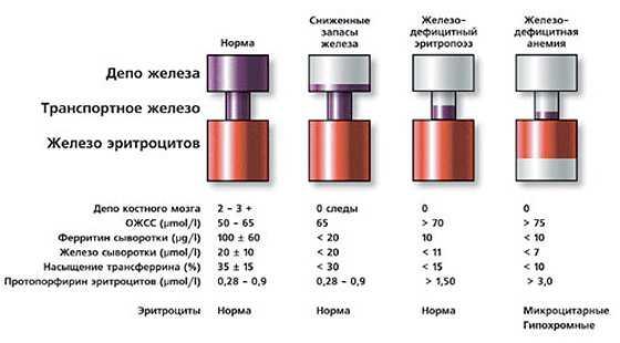 Кнт анализ крови что это
