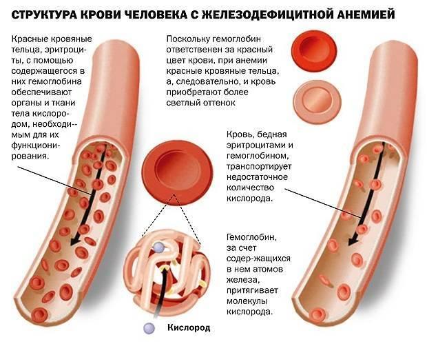Индекс атерогенности. Что это значит, если повышен, понижен, норма у взрослых женщин, мужчин в биохимическом анализе крови. Причины, как рассчитать
