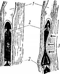 Схема движения крови по сосудам
