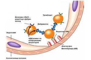 В чем роль тромбоцитов