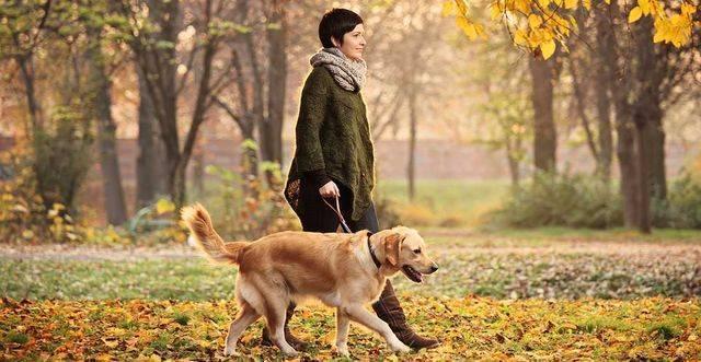 Лдг в крови повышен причины у собак