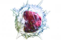 Виды лейкоцитов и их функции таблица
