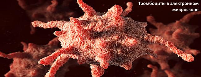 Тромбоцит а электронном микроскопе