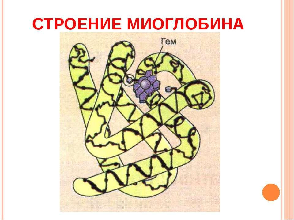 Миоглобин.
