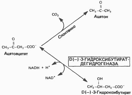 гидроксибутиратдегидрогеназа