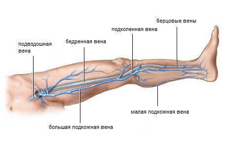 Препараты для улучшения кровообращения в конечностях ног