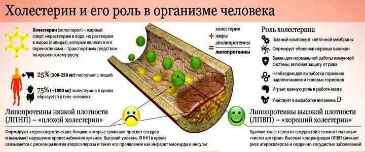 липопротеины высокой плотности и их функции