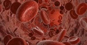 Виды эритроцитов в крови