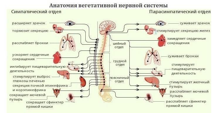 Что такое всд симптомы причины