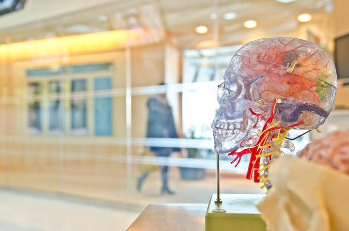 Брахиоцефальные артерии анатомия